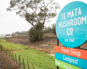 As part of Te Mata Mushrooms' resource consent, odours are not allowed to leave the boundaries of...
