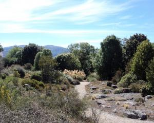 The alpine scree garden at Dunedin Botanic Garden. Photo: Supplied