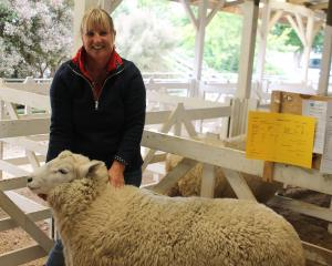 Pip Wilson holds her Perendale ram which sold for the top price of $8200 at the Gore ram sale...
