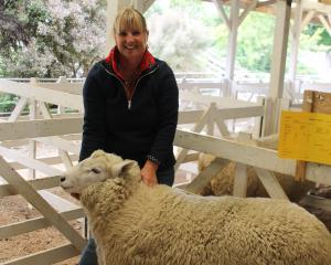 Waikaka woman Pip Wilson holds her Perendale ram which sold for the top price of $8200 at the...
