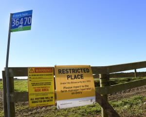 A North Otago farm under watch for M.bovis. PHOTO: STEPHEN JAQUIERY