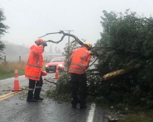 Workers inspect a fallen tree on Speargrass Flat Rd in Arrowtown. Photo: Daisy Hudson