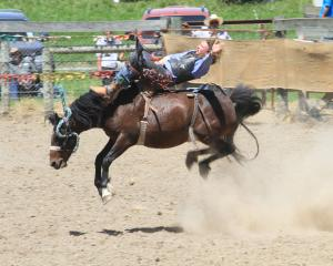 Hadlee Knight, of Wanaka, competes in trhe 2nd Div bareback at the Omarama Rodeo yesterday....