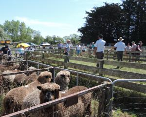 This year's Black and Coloured Sheep Breeders' Association of New Zealand national sale will...