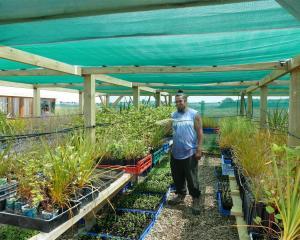 Oraka Aparima Runaka member Jade Maguire in his nursery with plants which he believes will...