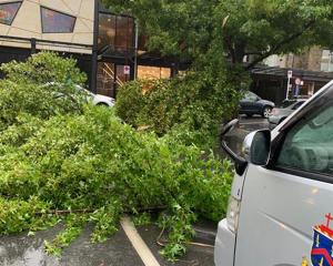 A tree blocks traffic at the corner of Church St and Marine Parade in central Queenstown. Photo:...