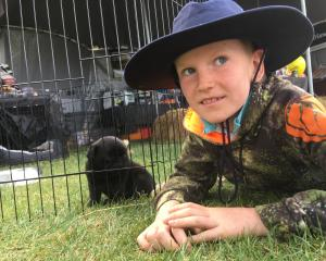 Jordy Cameron (8), of Wanaka, introduces himself to a puppy on display at the Central Otago A&amp...