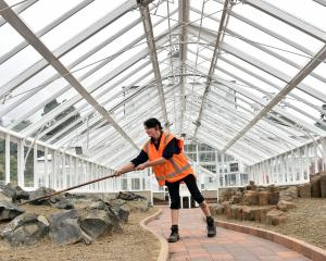 Kyla Mathewson works in the renovated winter garden glasshouse at the Dunedin Botanic Garden....