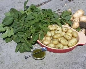 Appreciating new spuds is one of the joys of life, Peter Lyons says. Photo: ODT files