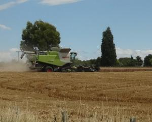 A harvester in action just south of Timaru. Photo: Chris Tobin