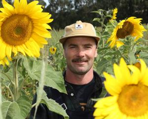 Mark  Anderson, of Waiwera Gorge, Clinton, is trialing a pasture mix that includes sunflowers as...