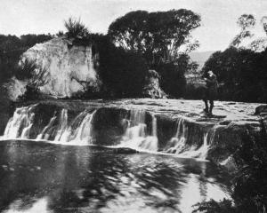 The falls on Flagstaff Creek, near the junction with the Silverstream, illustrate the amount of...