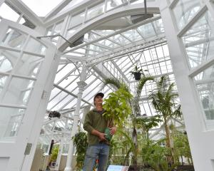 Adding the final touches to the Dunedin Botanic Garden winter glasshouse is curator Stephen...