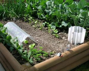 A raised bed provides better drainage and increased soil warmth. Photo: Gillian Vine