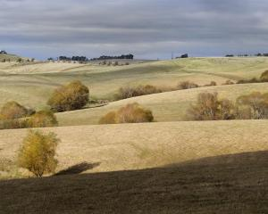As leaves turn colour, marking autumn, bare paddocks south of Balclutha show a developing drought...
