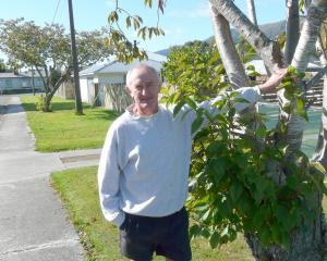 Tapanui resident Tony Williams wants to see cherry trees outside his Tramway St home pruned,...
