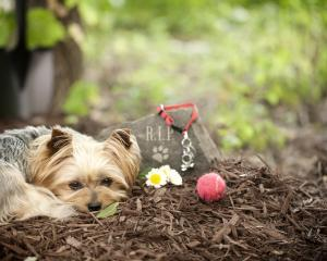 Backyard burials may suit but there are better options for your deceased pet. Photo: Getty Images
