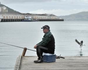 Anthony Racz, of Dunedin, tries his luck at fishing for salmon in the Otago Harbour Steamer Basin...