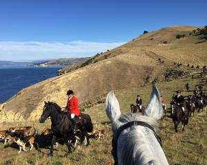 Huntsman Anne Beattie leads the pack and followers around the Matanaka headland.