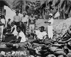 Labour boys making copra in Samoa. - Otago Witness, 14.5.1919