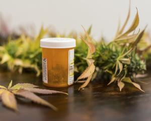 A pair of Otago academics have argued for cannabis-based medicines to be subject to the same...