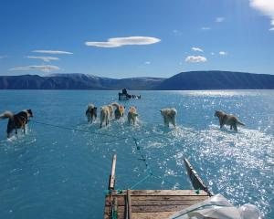 Scientists setting out to retrieve monitoring equipment in Greenland last week found themselves...