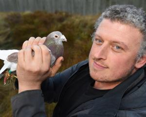 Damian Scarf has been given $50,000 to better study the cognitive abilities of pigeons. PHOTO:...
