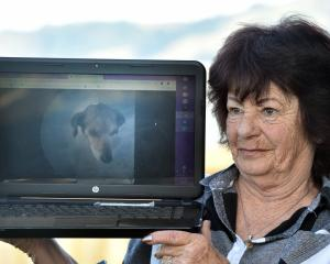 Mourning the loss of her fox terrier Buddy (pictured) is Harwood woman Sharron Baillie. Photos:...