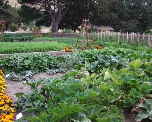 Crop rotation results in better vegetables and flowers. Photo: Gillian Vine