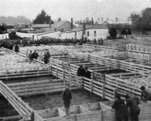 The saleyards at Milton on a recent sale day. - Otago Witness, 25.6.1919