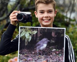 Dunedin boy Jack Aubin holds an image of the robin he and his dad spotted at Ross Creek Reserve...