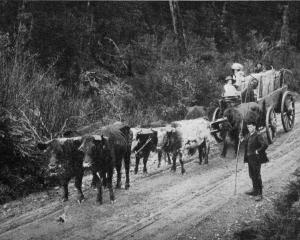 Making a home in the bush: transporting the family and household effects by bullock team. - Otago...