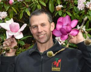 Dunedin Botanic Garden collections supervisor Dylan Norfield holds spectacular Magnolia...