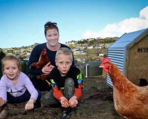 Lorilee de Jong and her children Maisy, 5, and Noah, 8, have 10 free-range chickens on their...
