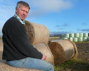 West Otago A&P Society vice-president Robert Kane assesses his hay and baleage stocks before...