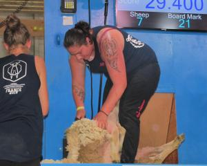Pagan Karauria in the French All Nations Women's final at the start of World Sheep Shearing and...