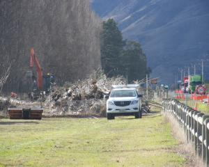 Poplar tree felling was in full swing yesterday along State Highway 6 near Cromwell yesterday....