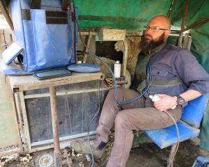 Daniel Wheeler hard at work scanning ewes. Photo: Maggie Croft