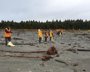 Volunteers move slowly in an ''emu line''  revisiting ground  already  covered to pick up any...