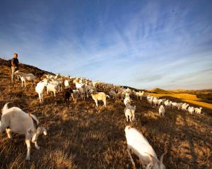 Clinton farmer David Shaw and his goats. Photo: Supplied