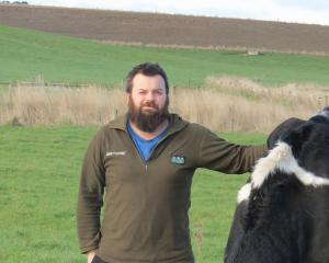 Dairy farm manager Richard Ray, of Clydevale, pictured with one of the cows from his Array...
