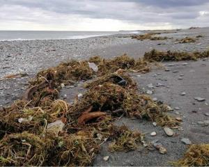 Rubbish from the old Fox Glacier landfill. PHOTO: SUPPLIED