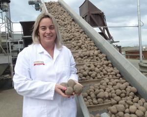Charlotte Bowen checks out some potatoes at the Washdyke factory. Photo: Chris Tobin