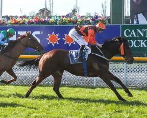 Irish Excuse, pictured winning the open sprint at Riccarton  Park  on the first day of the Grand...