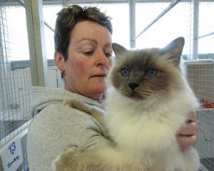 Paws a While co-owner Jill Campbell with Smokey the cat. The Oamaru cattery is fully booked for...