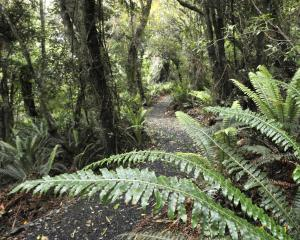 A loop track at Orokonui Ecosanctuary. Photo: Gerard O'Brien