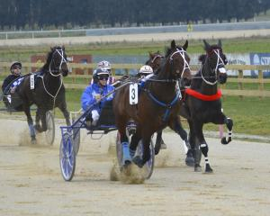 Osar Bonavena strides out during his win for driver Mark Purdon at Oamaru yesterday. Photo: JONNY...