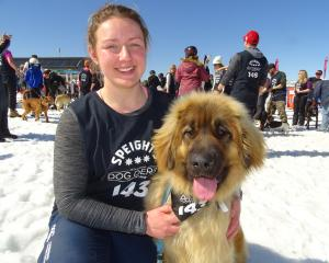 Molly Butt with her Leonberger dog Ellie, both of Tuatapere, before the whistle blew for the ...