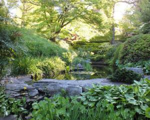 Hostas, moisture-loving irises and, above them, azaleas on the banks of the stream, one of the...