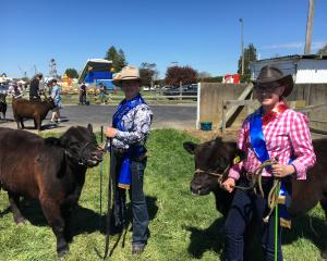 Georgia Rhodes, left, and Hillary Cooper lead some lowland cattle at last year's Rangiora Show....